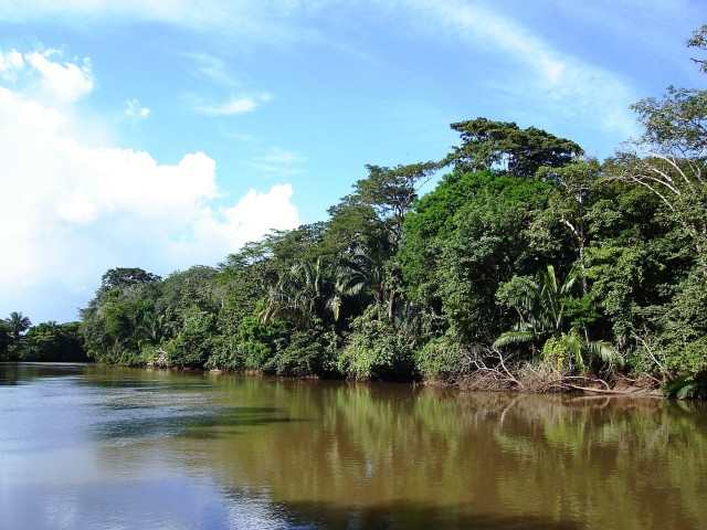 Nationaal Park Palo Verde: jungle-rivierboottocht halve dag