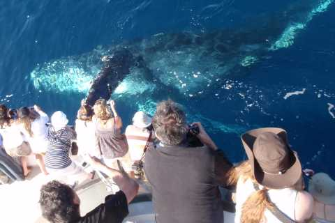 Newport Beach: 2-Hour Whale Watching Tour