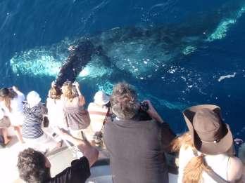 Newport Beach: 2-stündige Whale Watching Tour