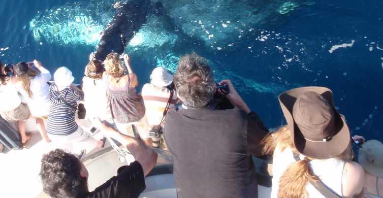 Newport Beach: 2-Hour Whale Watching Tour