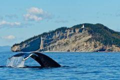 Excursão para observação de baleias saindo da cidade de Quebec
