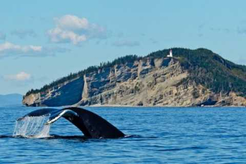 Whale Watching Tour from Quebec City