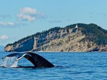 Walbeobachtungstour ab Québec
