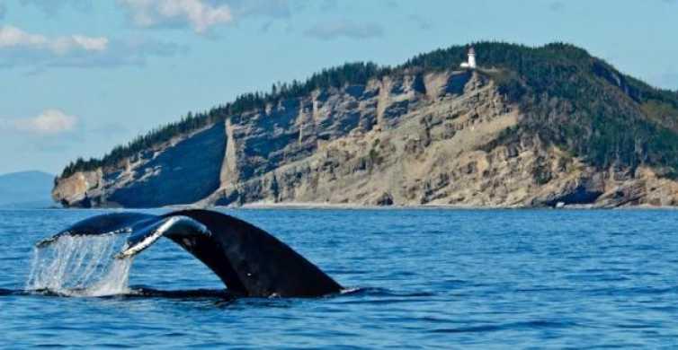 Desde Quebec: tour para avistar ballenas