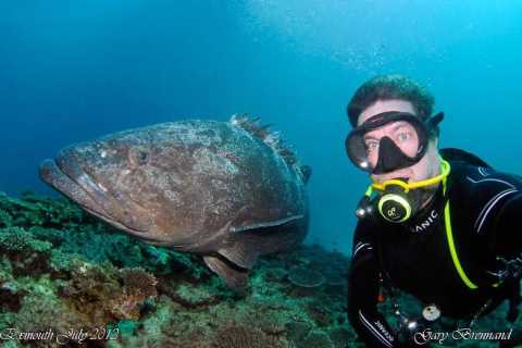Scuba Diving in Ningaloo Reef: Full-Day from Exmouth