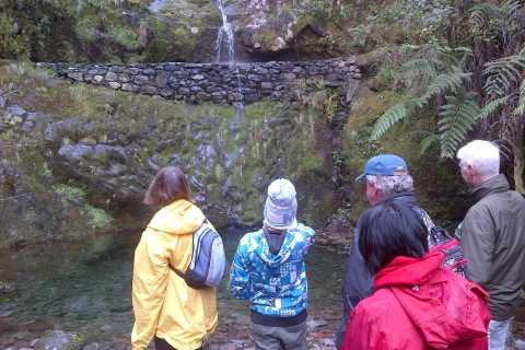 Madeira: Ribeiro Frio to Portela 4-Hour Guided Walk