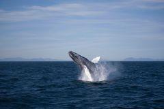 Reykjavik: Excursão Observação de Baleias de 3 Horas
