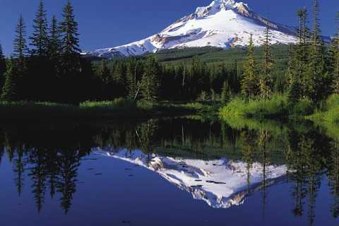 Mt. Hood National Forest and Wine Full-Day Private Tour