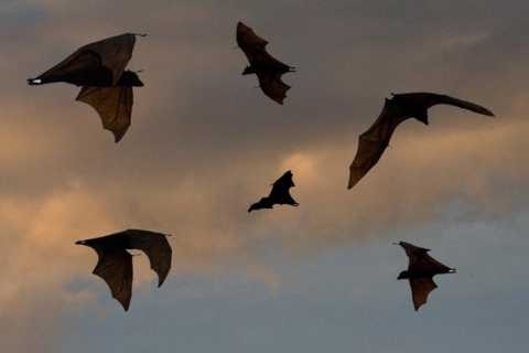 Flying Foxes and Wetlands: Langkawi Sunset Cruise