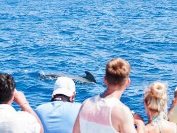 Teneriffa: Walbeobachtungstour mit Schnorcheln