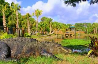 Orlando: Eintritt für den Wild Florida Park & Alligator-Show