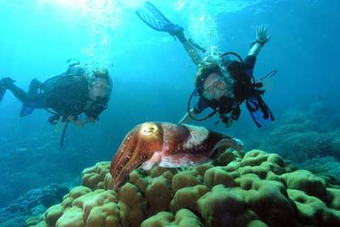Marmaris: Diving with Lunch
