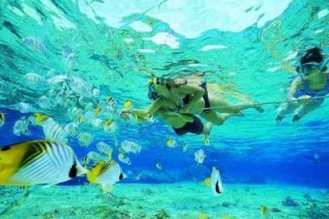 Fuga na Ilha Ixtapa: Excursão de 5 Horas com Almoço
