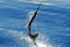 Expedição de pesca em alto mar em Acapulco