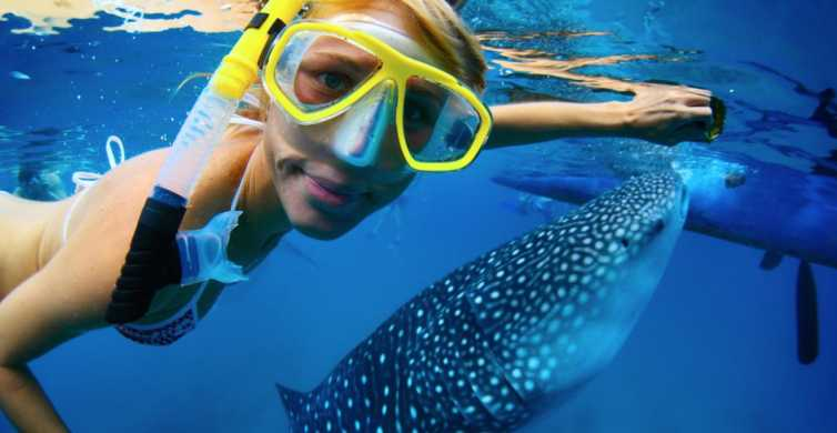 Snorkel with Whale Sharks La Paz: Day Tour from Cabo