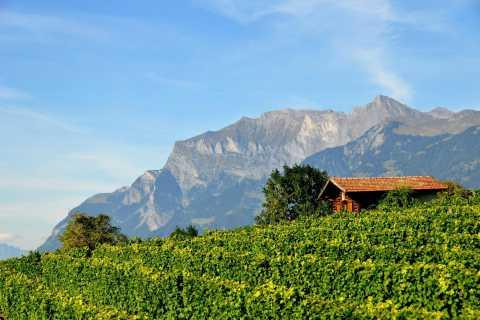 Graubünden und Heidiland: Halbtagesweinlese-Wein-Tour