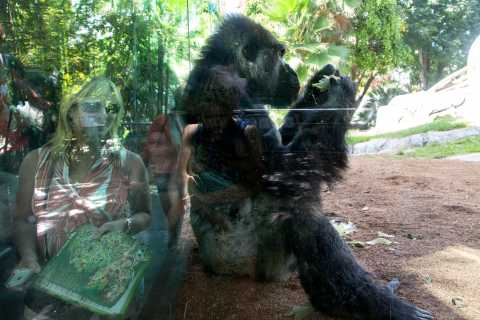San Diego Zoo Tickets and Transfer from LA