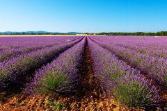 De Marselha: Excursão Campos de Lavanda de Valensole 1 Dia