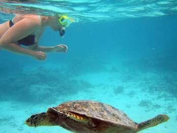 Key West: Tagesausflug ab Miami mit diversen Optionen