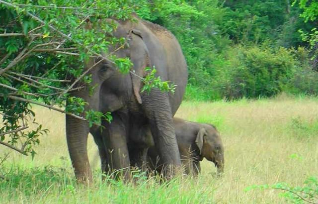 Sri Lanka: tweedaagse Yala Wildlife Safari