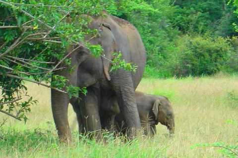 Sri Lanka: Two-Day Yala Wildlife Safari