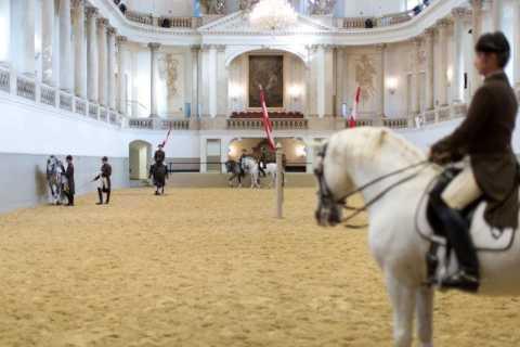 Вена: тренировка в Испанской школе верховой езды