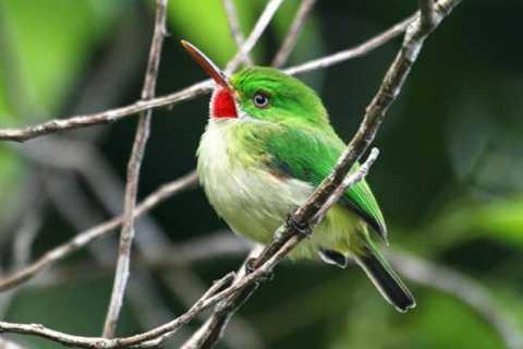 Rockland Bird Sanctuary