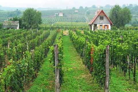 Tour di un giorno di Pécs e Siklós con degustazione di vini Villány