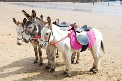 Agadir: 2-Hour Donkey Ride