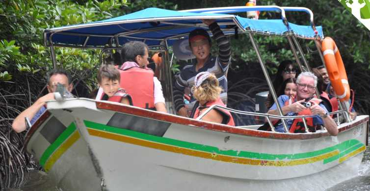 Langkawi Mangrove Safari Boat Tour