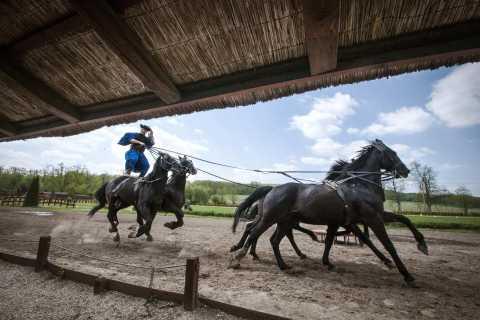 Magic Hungary Tour: Baroque Palace and Horse Show