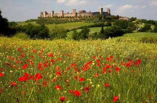Siena: halbtägige geführte Wanderung nach Monteriggioni