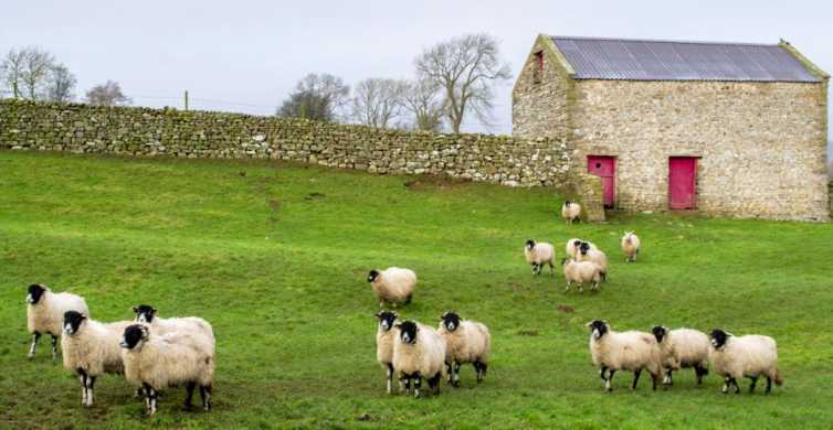 The Yorkshire Dales Tour from York