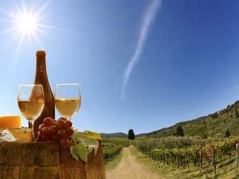Ab Pisa oder Lucca: Weinverkostung in den Hügeln der Toskana