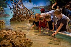 Boston: Ingresso New England Aquarium