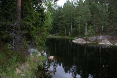 Nuuksio National Park Full-Day Hike from Helsinki