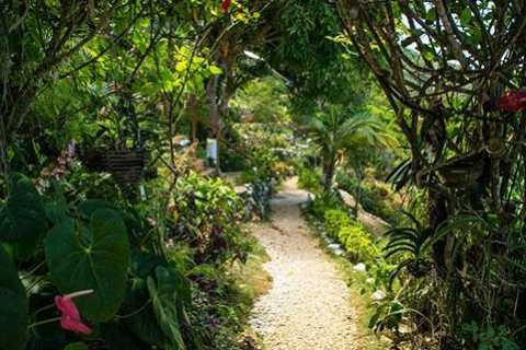 Ah Ras Natango Gallery, Bird Watch and Botanical Garden Tour