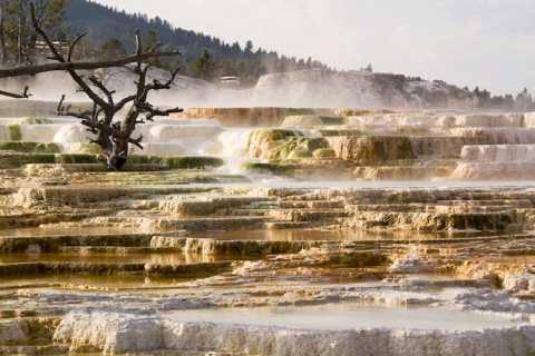 From Jackson: Grand Teton & Yellowstone 2-Day 1-Night Tour