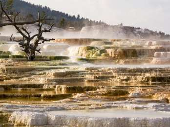 Ab Jackson: Grand Teton & Yellowstone 2-Tage- / 1-Nacht-Tour