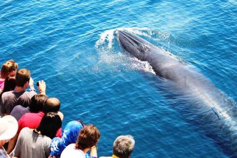 Cruzeiro Ecológico c/ Observação de Baleias e Golfinhos