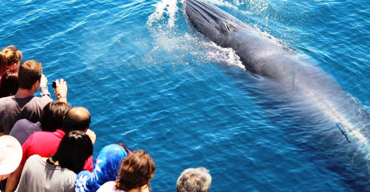 Whale and Dolphin Watching Half-Day Eco Cruise