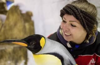 Dubai: Tickets für die Ski Dubai - Pinguine hautnah erleben