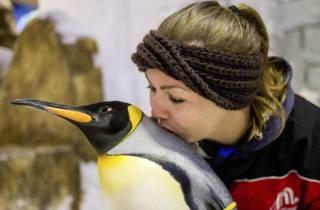 Tickets für die Ski Dubai: Pinguine hautnah erleben