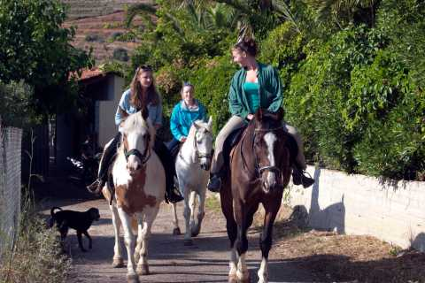 From Nafplio: Horseback Riding in Nafplio
