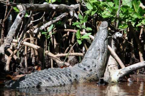 Cancun: Wildlife Lagoon & Crocodile Observation Private Tour