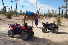 Marrakech: Passeio de Camelo de 1H e 2H de Quadriciclo