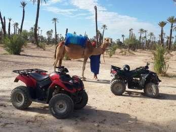Marrakesch: 1-stündiger Kamelritt und 2-stündige Quadfahrt