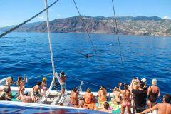Funchal: Observação de Golfinhos e Baleias em Madeira