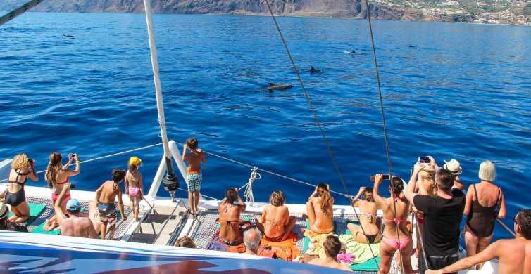 Madeira: dolfijnen en walvissen spotten vanuit Funchal