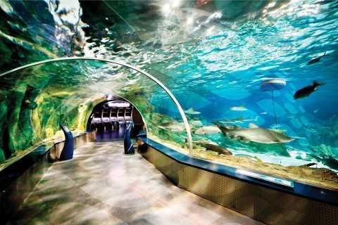 Istanbul Aquarium and Aqua Florya Shopping Mall Tour